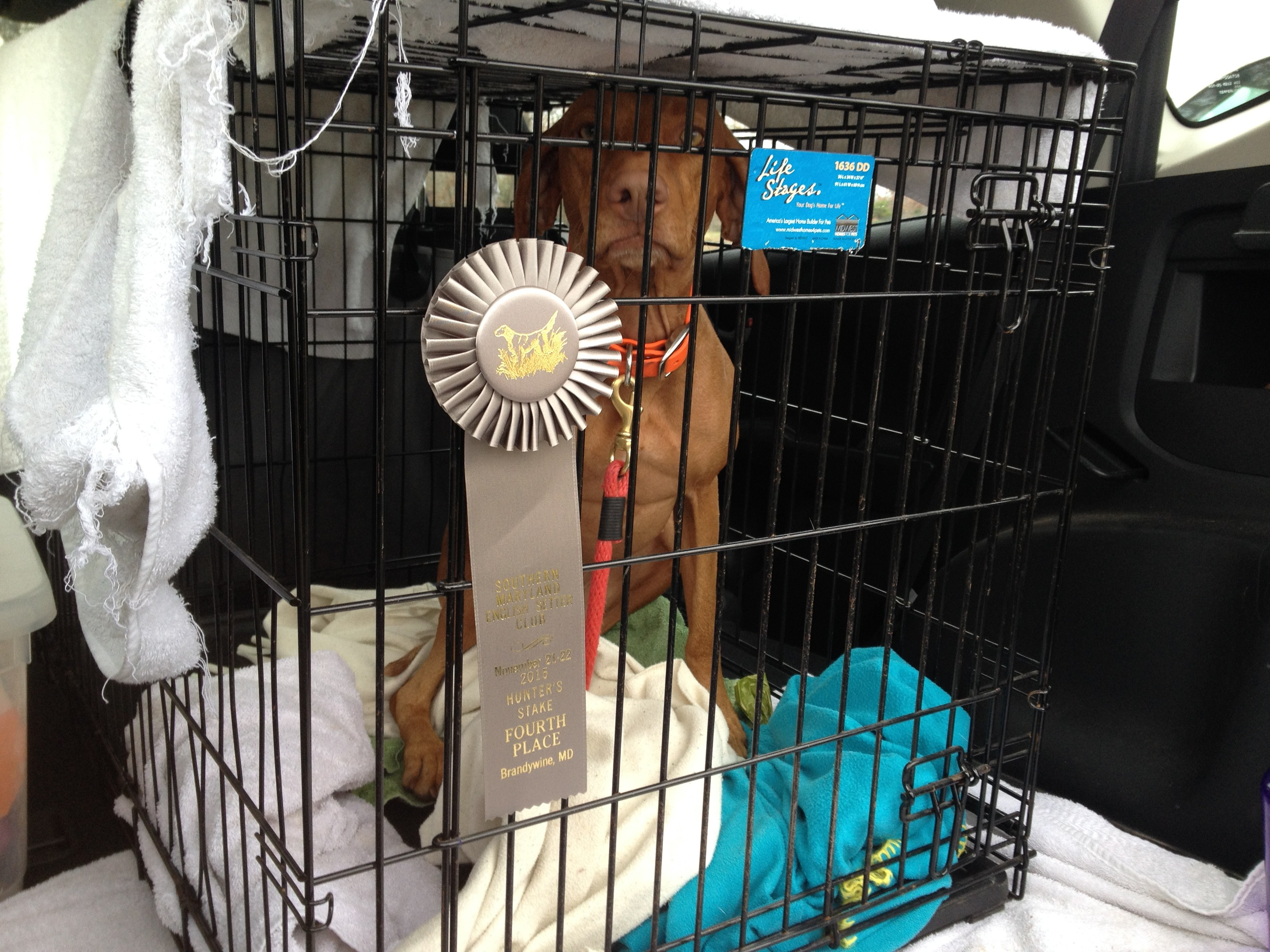 I won a ribbon! Now get me out of this crate.