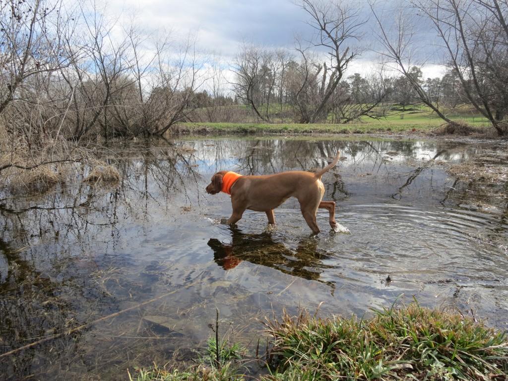 Zara exploring the lake