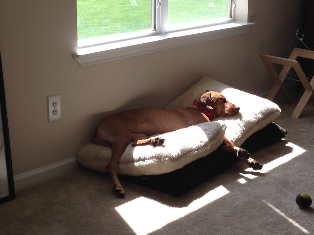 We set up a bunch of pillows in our study for a sunny place for her to sleep like a princess.