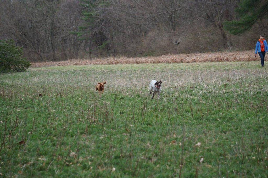 Chasing birds!
