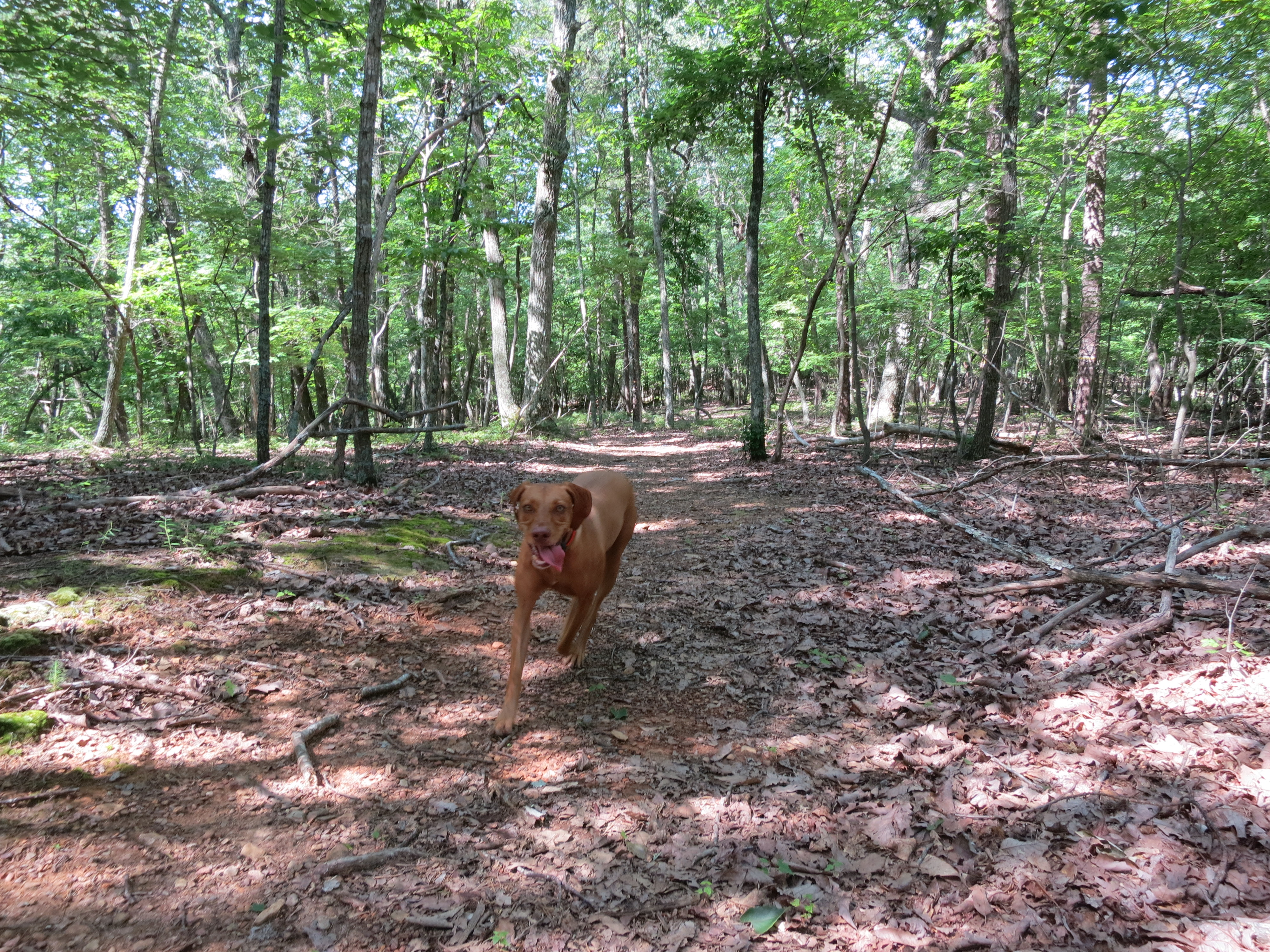 Rōmr – Private Land for Off Leash Dog Hikes!