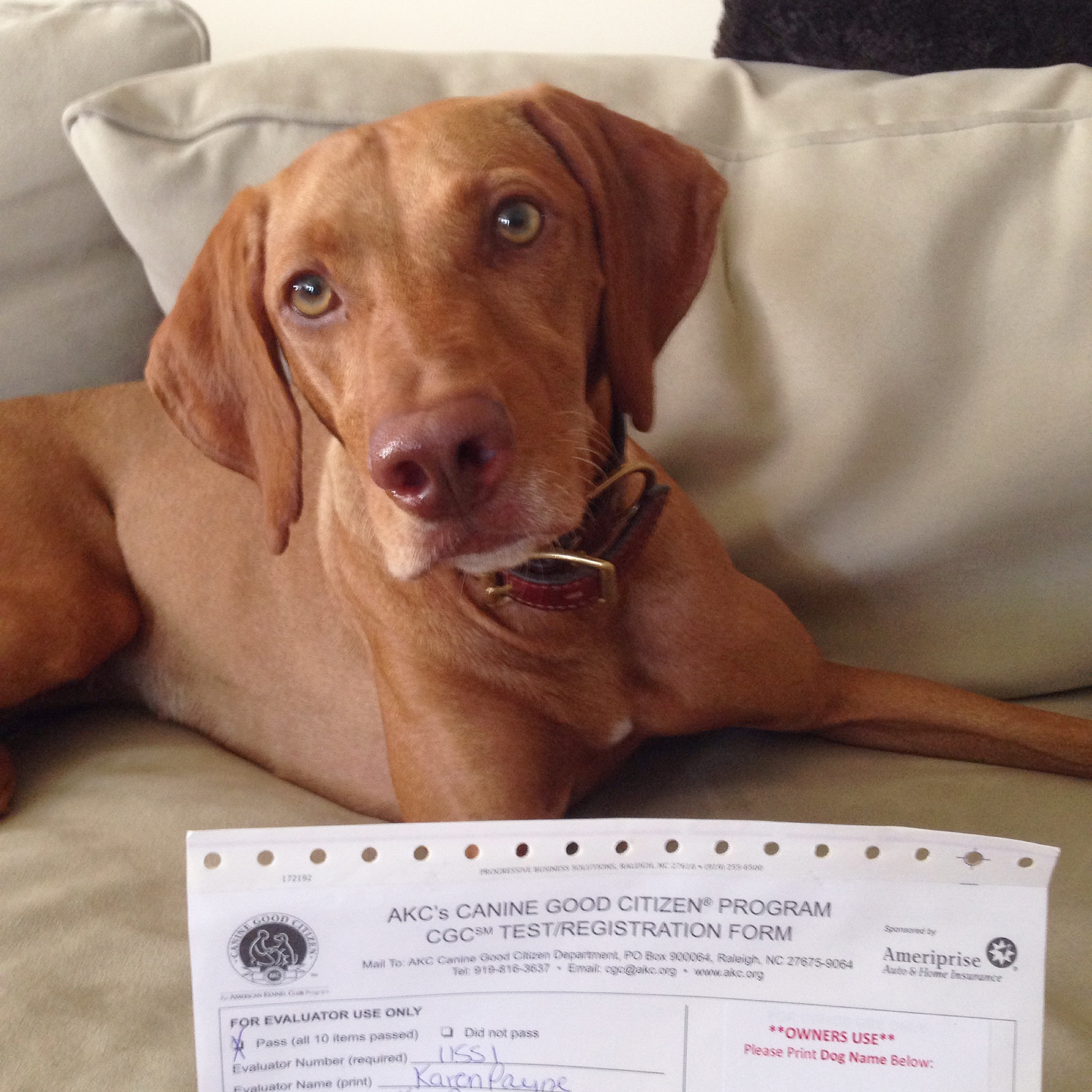 Canine Good Citizen Test – Passed!