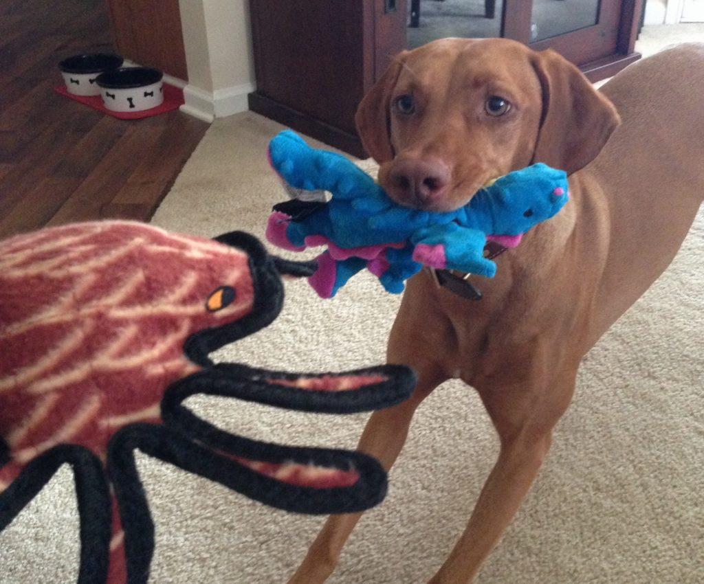 Zara enjoying her new dragon and spider toys at home.