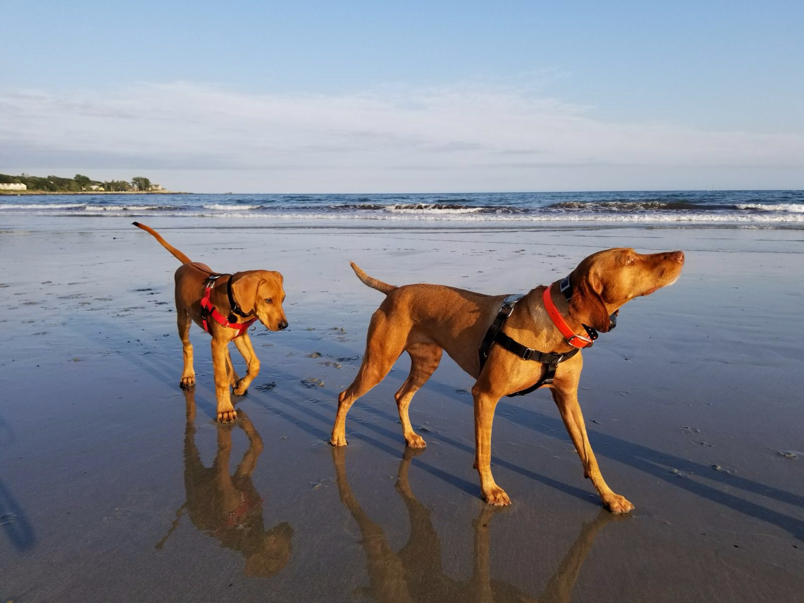 Traveling with High-Energy Dogs