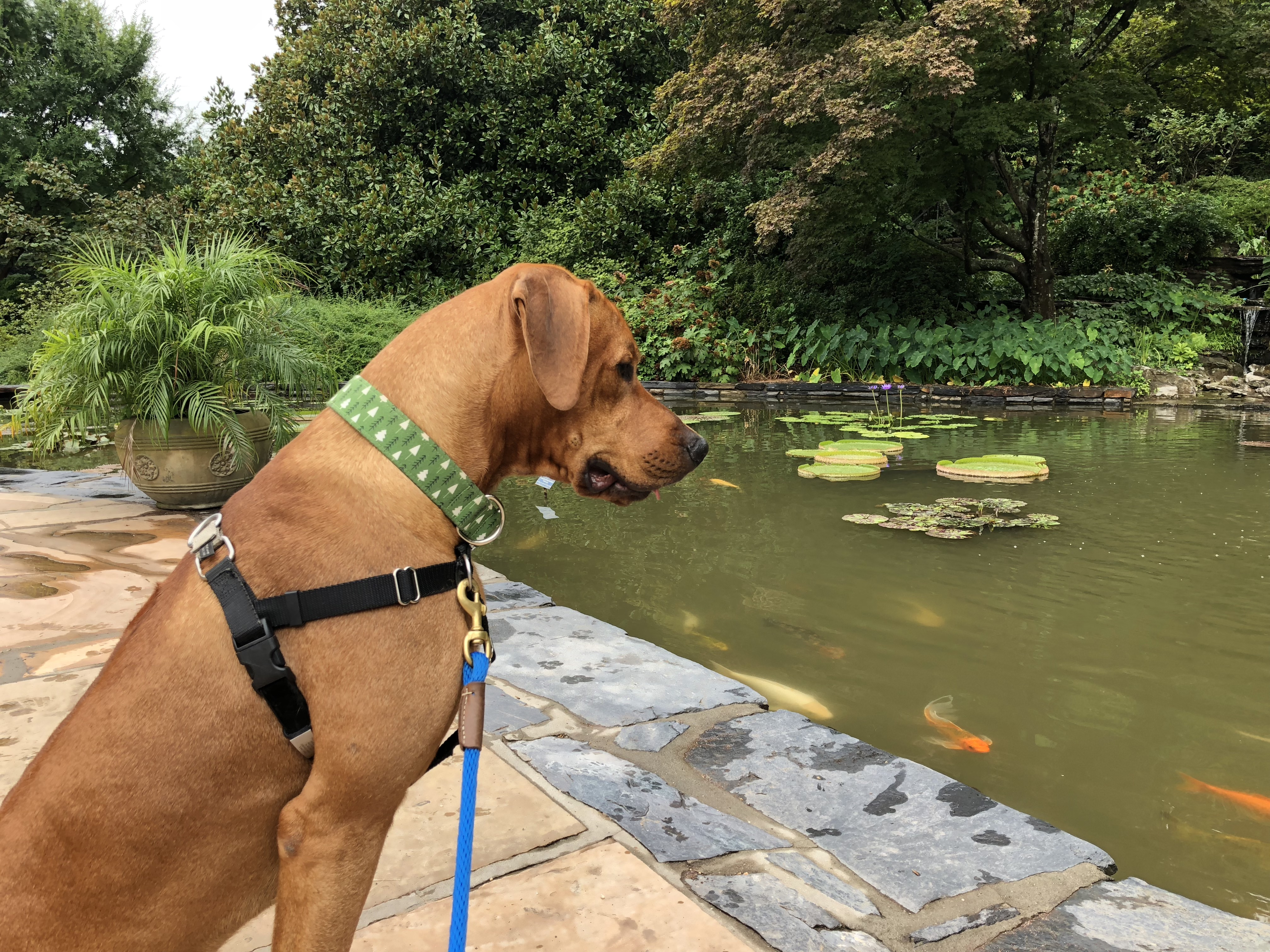 Colombo's Canine Good Citizen Test