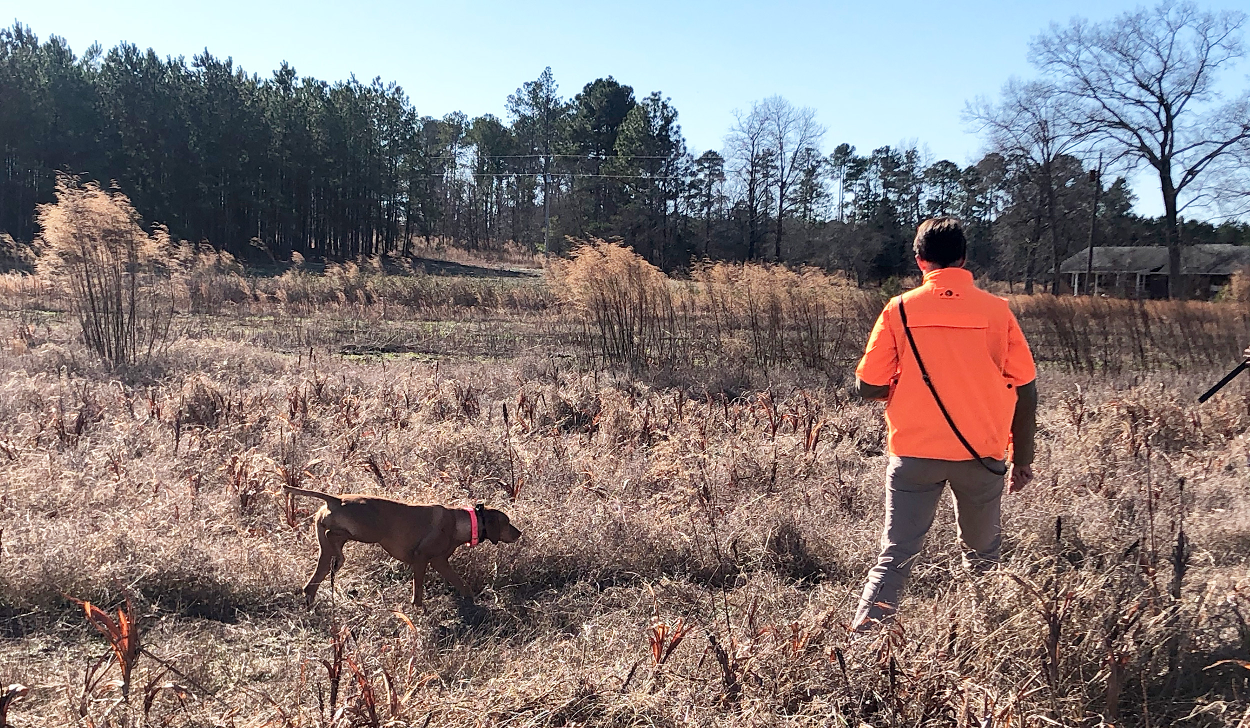 Who is the Accidental Bird Dog?