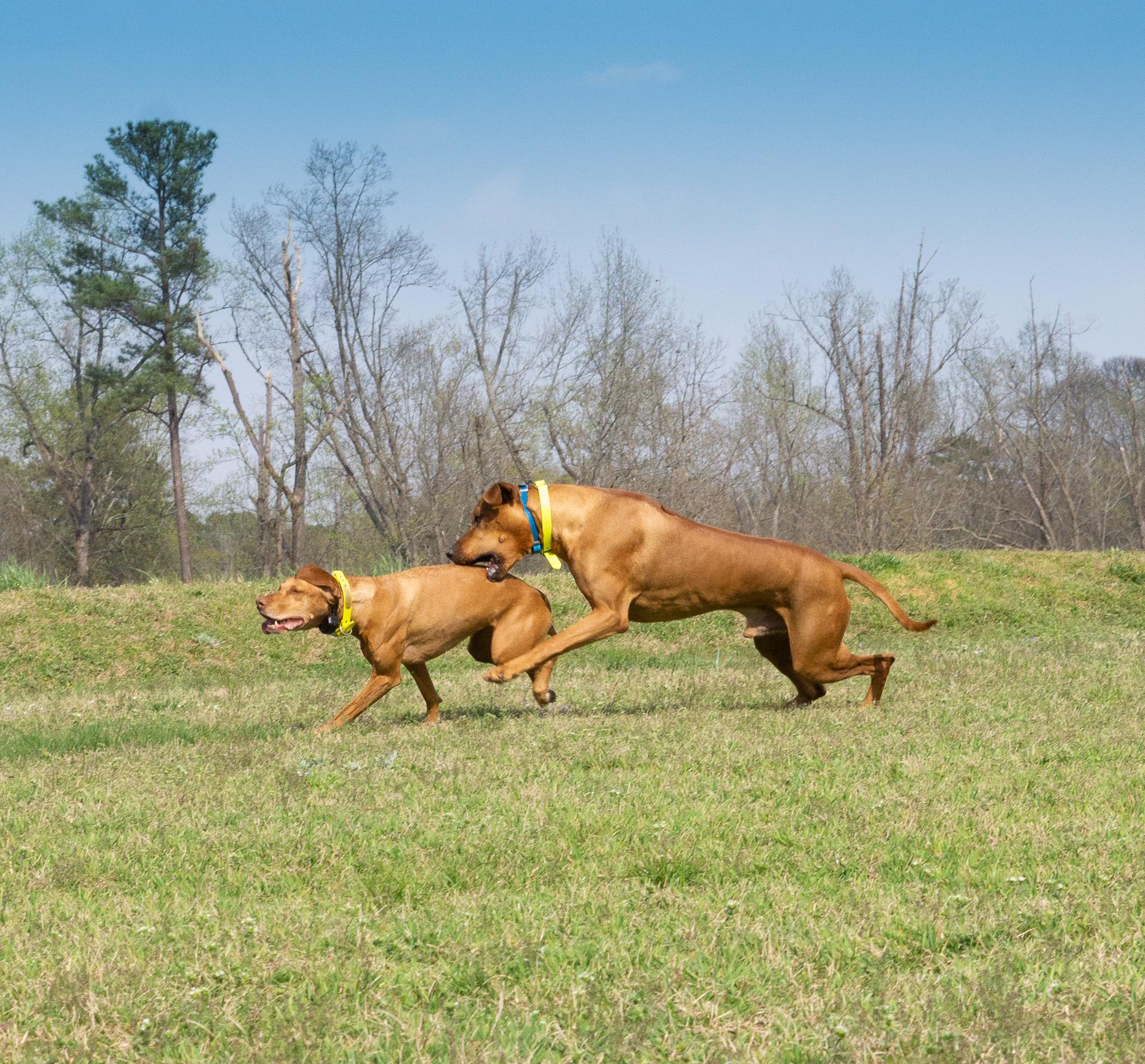 Dog Activities During Coronavirus