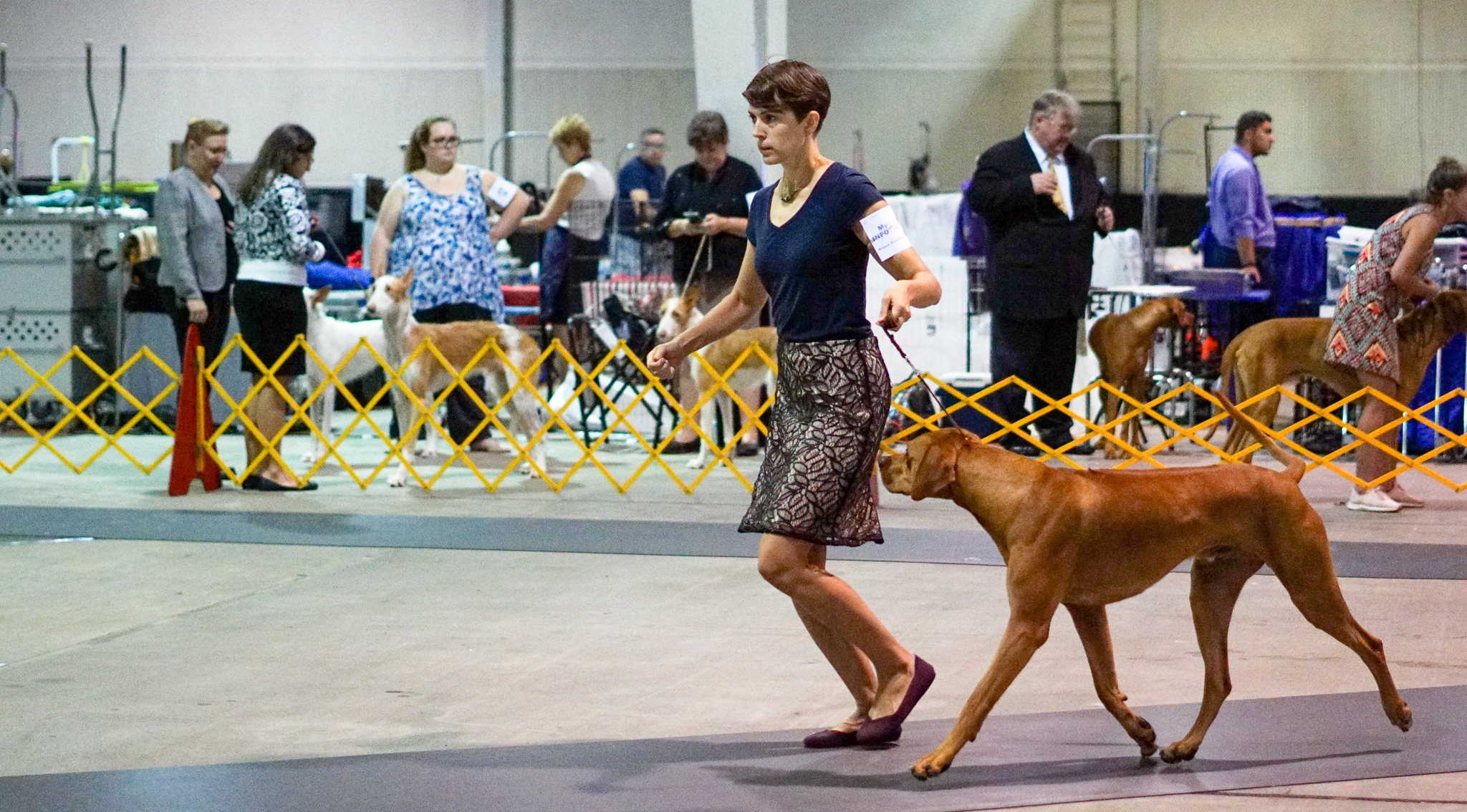 Anxiety in Dog Sports