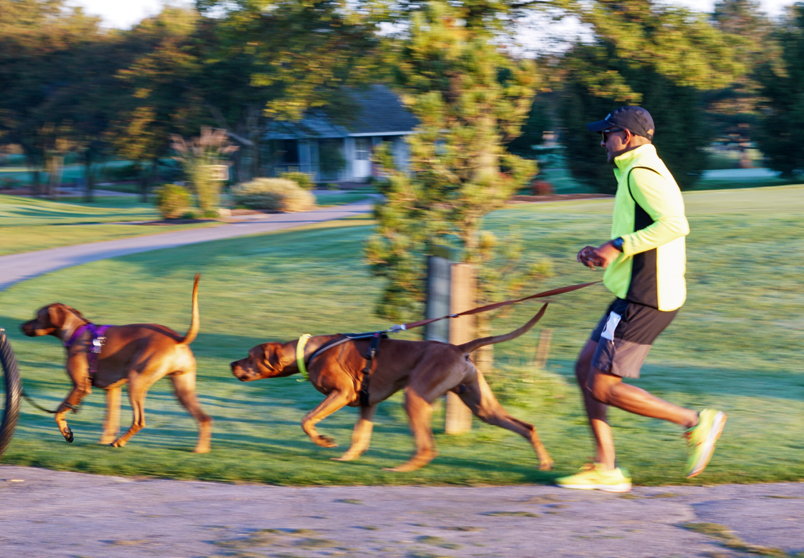 Colombo chasing another dog