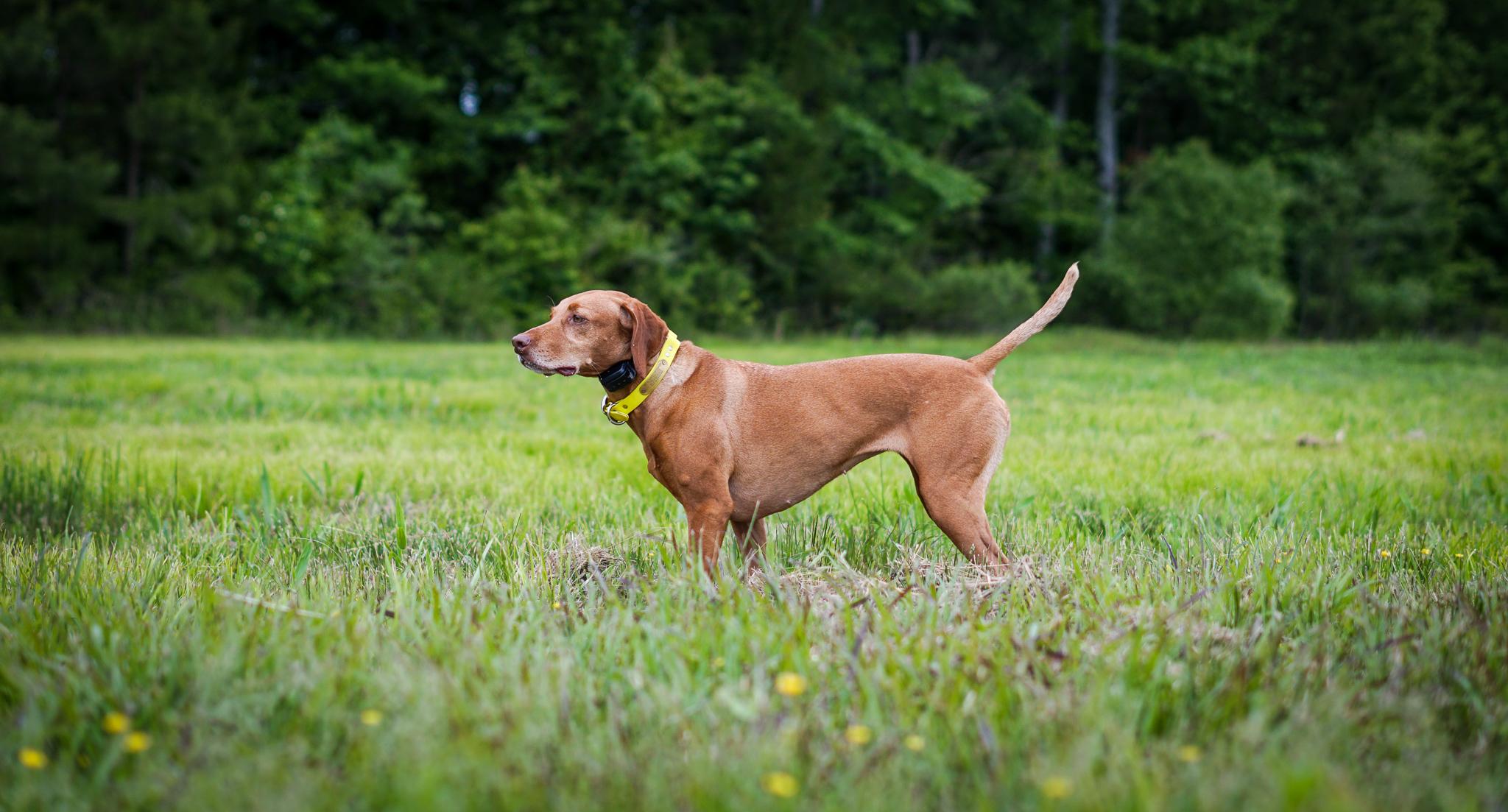 Bird Dog Tests & Trials: An Overview