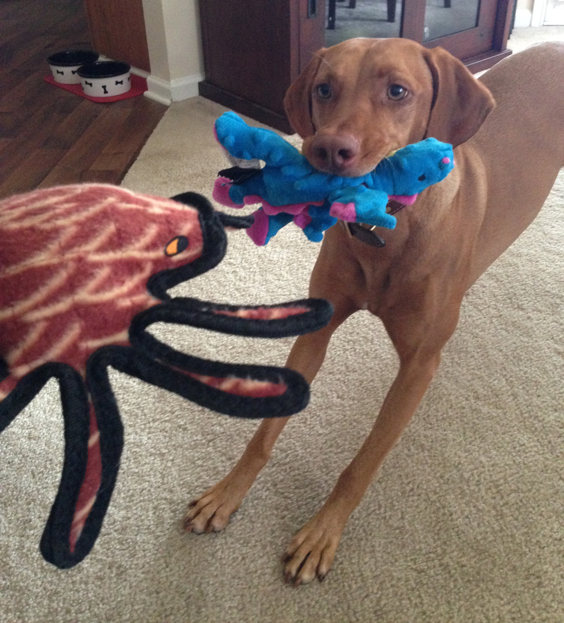 Zara and a Tuffy spider and GoDog dragon