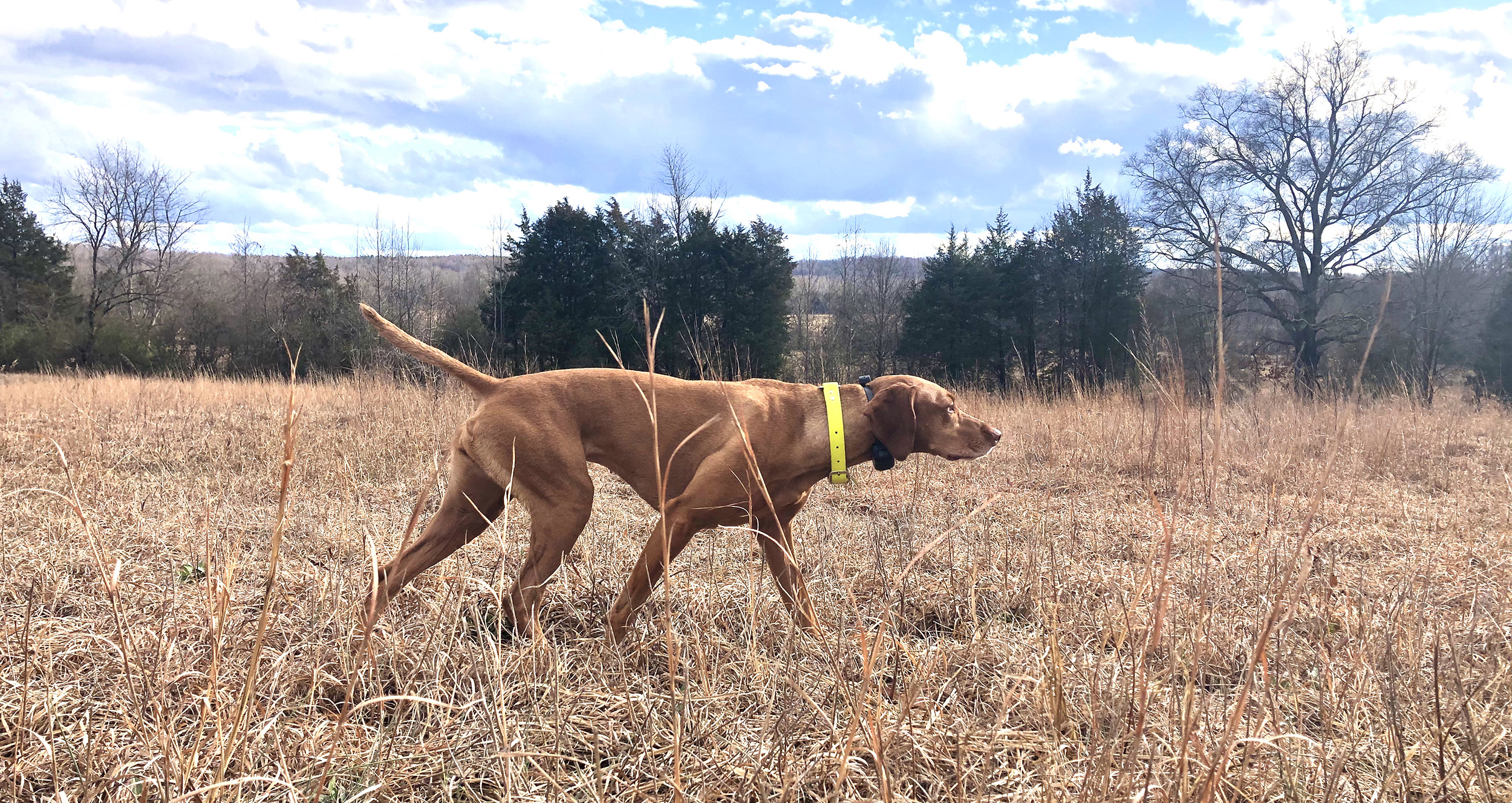 How to Find a Place to Train Your Bird Dog