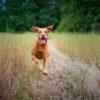 Zara running