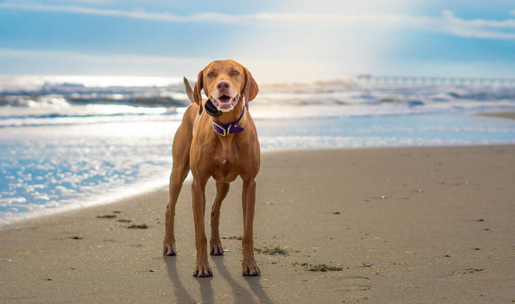 Zara on the beach