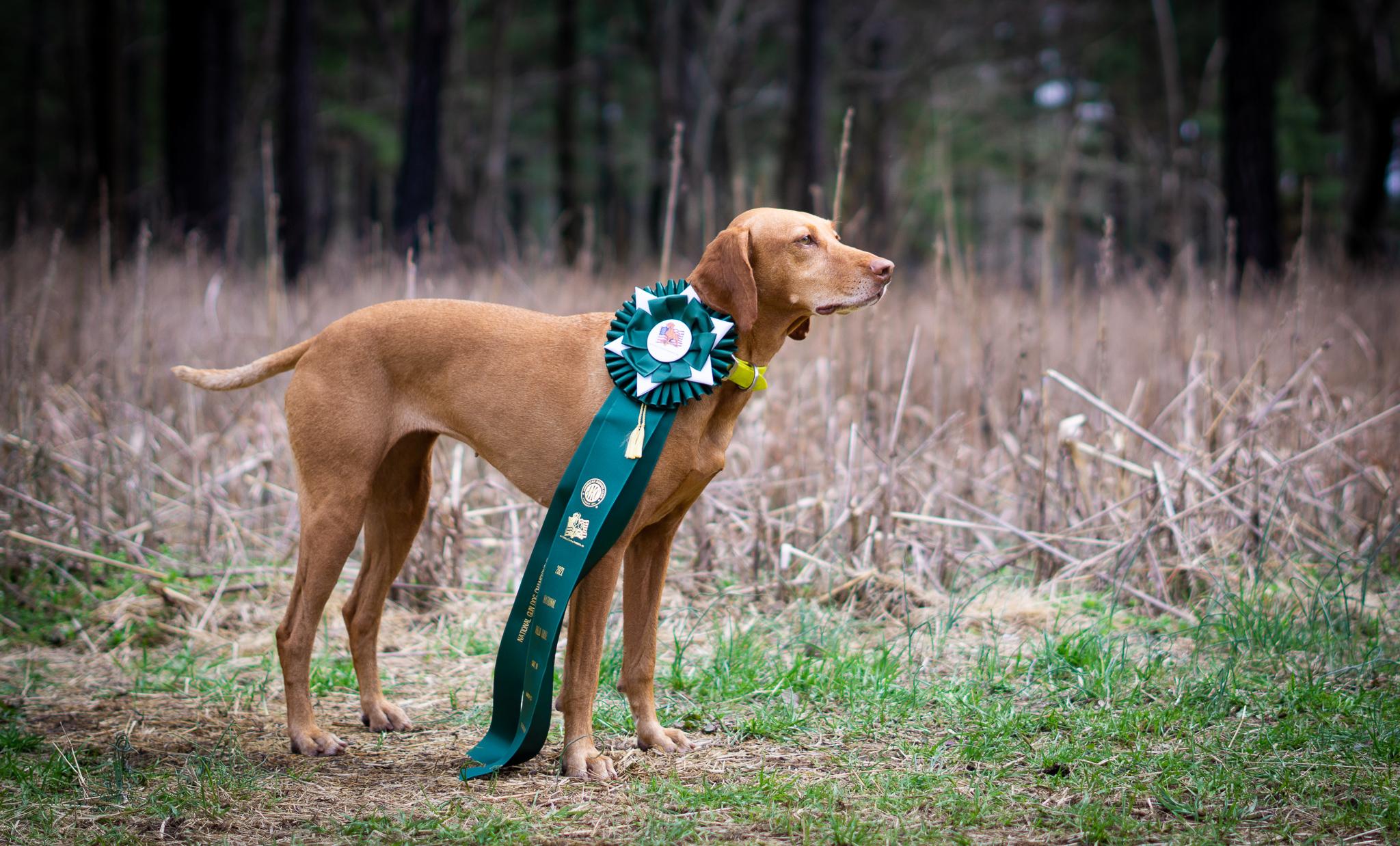 The Vizsla Club of America National Gun Dog Championship