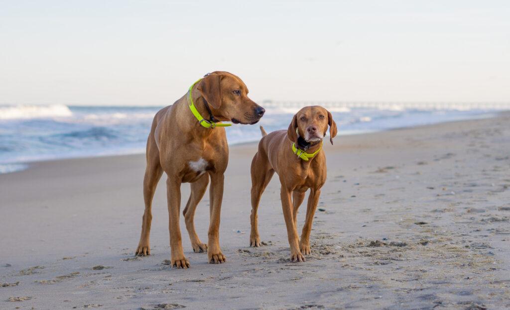Zara and Colombo on the beach