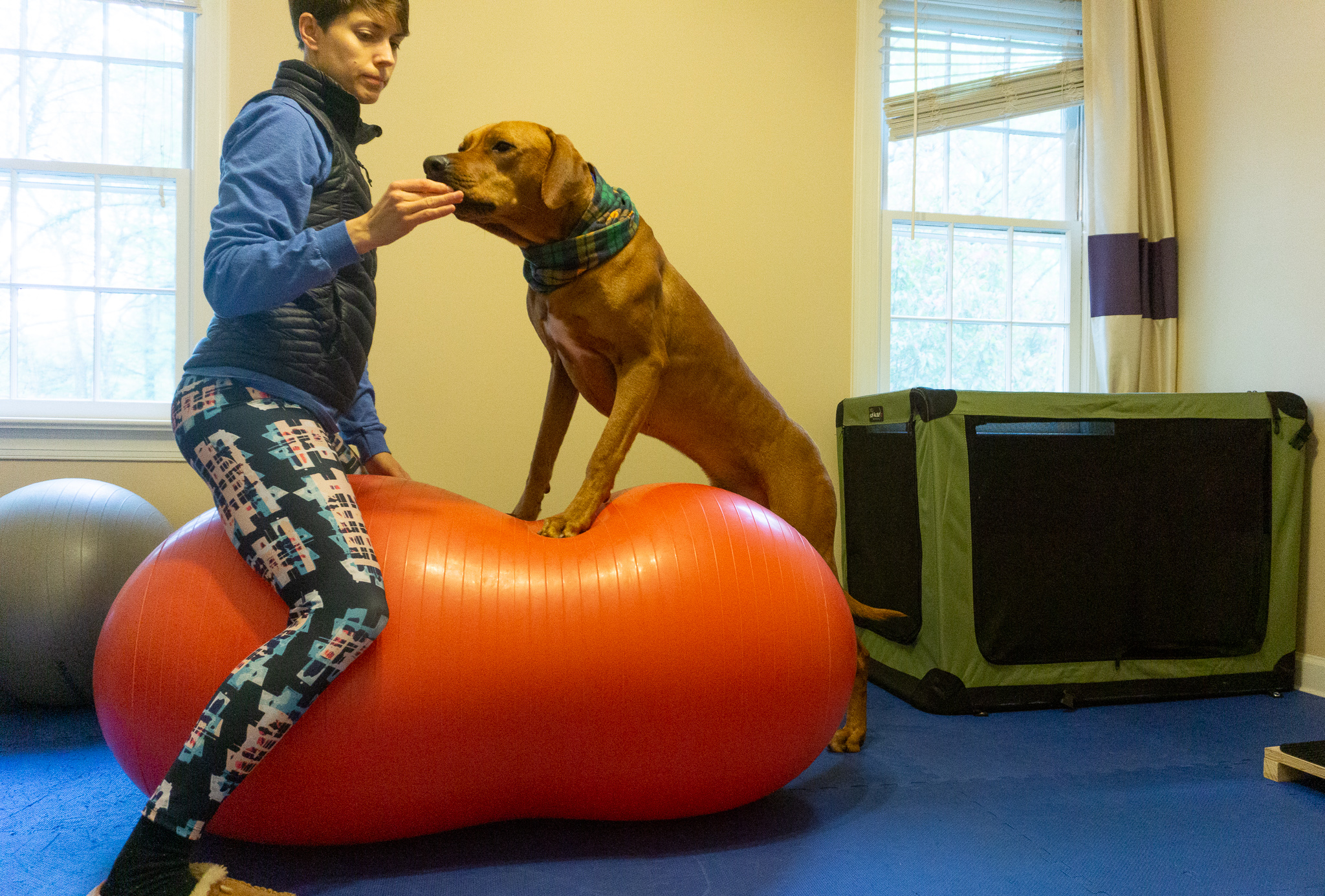 Fitpaws peanut in my home dog gym