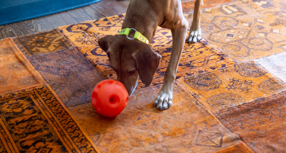 Zara and the Omega Paw treat balll