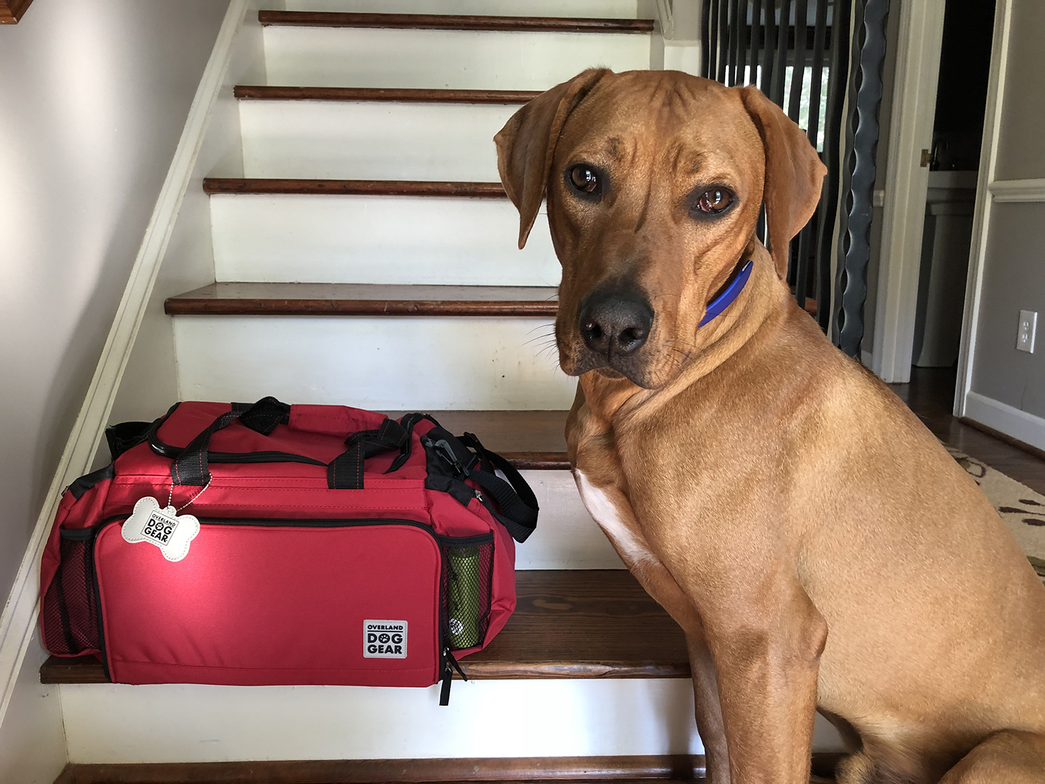 traveling with a high-energy dog