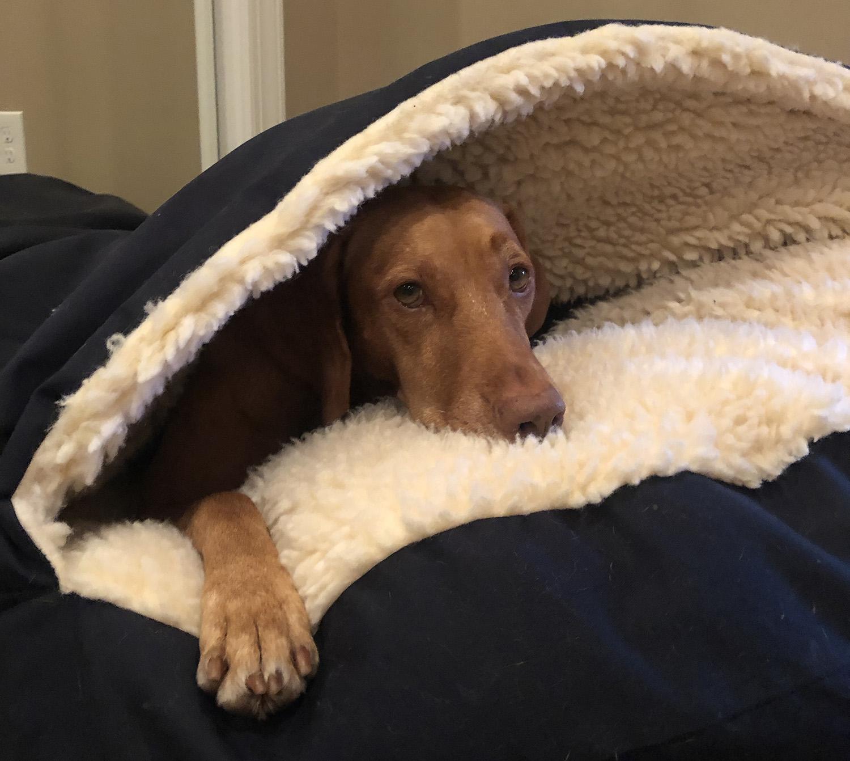 Zara in the cozy cave